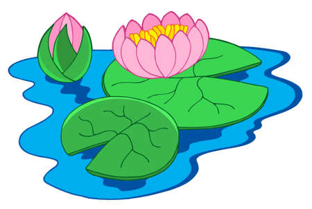 pond water: Pink water lilies - vector illustration.