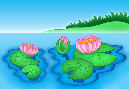 lilium: Pink water lilies 2 - color illustration.