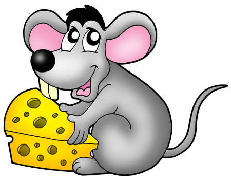 animal nose: Cute mouse holding cheese - color illustration.