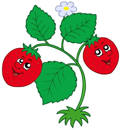 strawberry cartoon: Cute strawberry on white background - vector illustration.