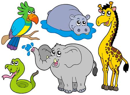 camelopard: Wildlife animals collection - vector illustration.