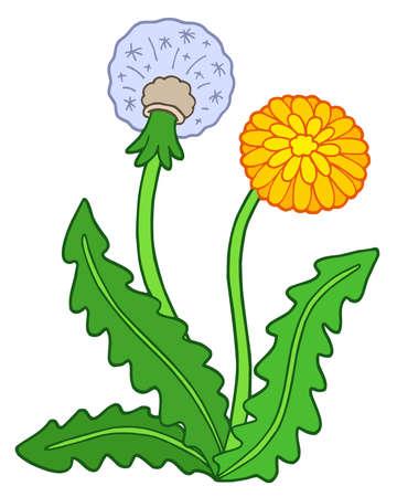 Dandelion on white background - vector illustration. Vector