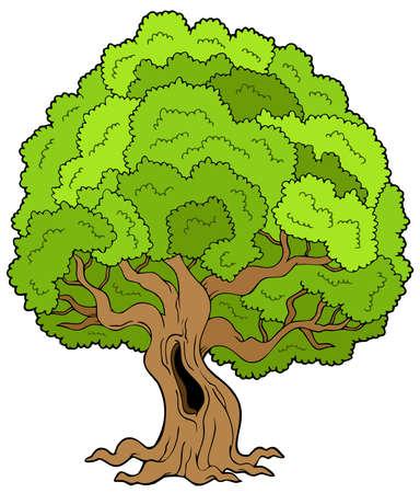 Big leafy tree Stock Vector - 6579487