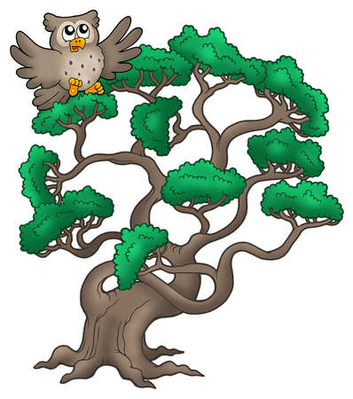 coniferous tree: Big pine tree with cartoon owl - color illustration. Stock Photo