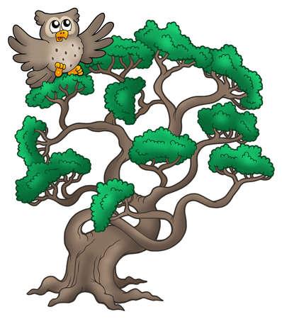 coniferous forest: �rbol de pino grande con dibujos animados b�ho - ilustraci�n de color.  Foto de archivo