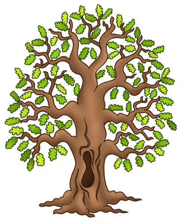 Oak tree on white background - color illustration. Stock Illustration - 6579466