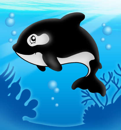 specie: Cartoon killer whale in sea - color illustration.