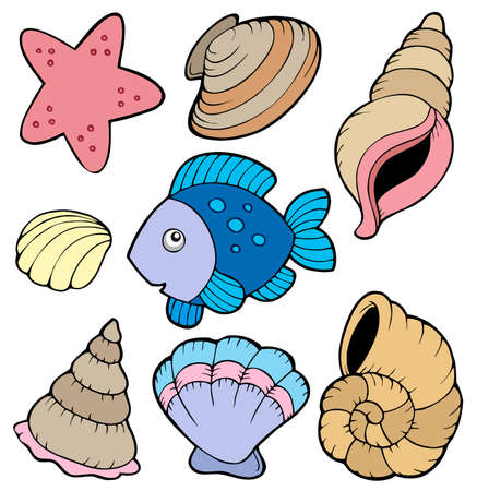 scallops: Various shells and fish collection -  illustration.