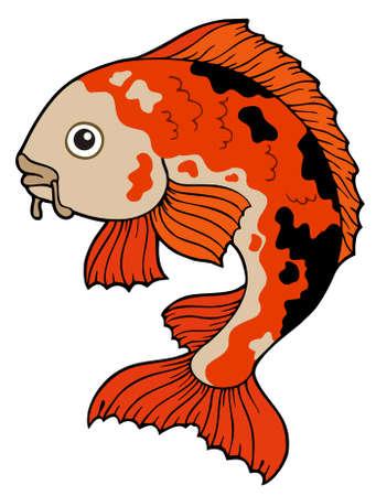 koi fish: Koi fish on white background Illustration
