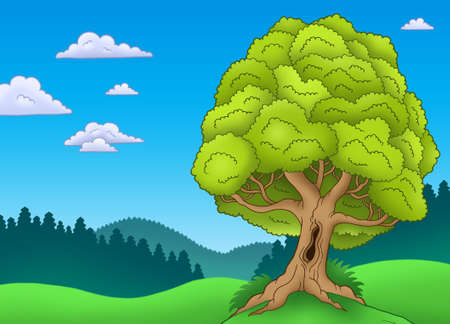huge tree: Big leafy tree in landscape - color illustration. Stock Photo
