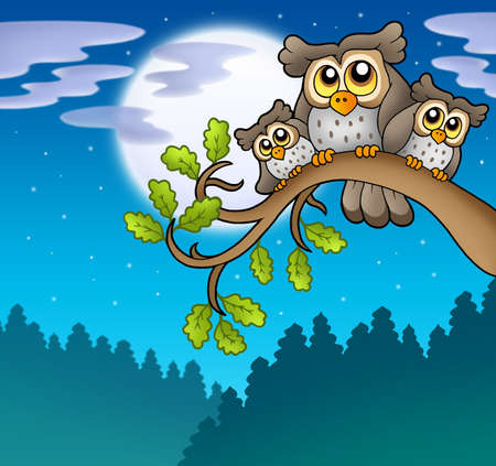 birds eye: Cute owls on branch at night - color illustration. Stock Photo