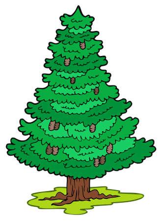 fir cone: Cartoon coniferous tree