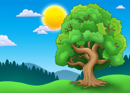 deciduous: Green leafy tree in landscape - color illustration.