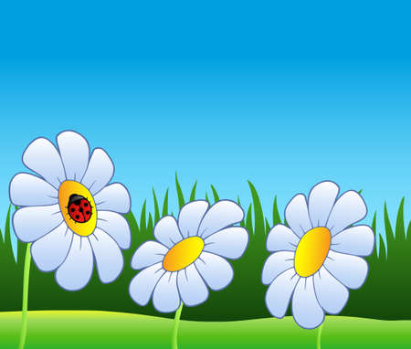 Three daisies and ladybug - vector illustration. Stock Vector - 8976748