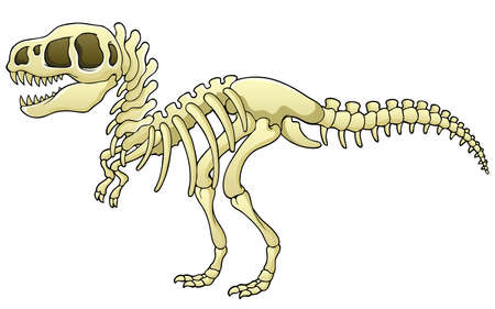 paleontology: Tyrannosaurus skeleton image - vector illustration  Illustration