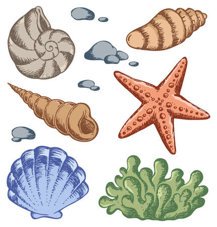 Sea shells drawings  Vector