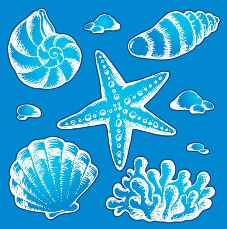 sea water: Sea shells drawings 2 -  illustration