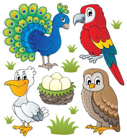 plumas de pavo real: Aves tema Varios conjunto ilustración