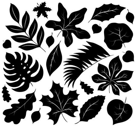 fall leaves on white: Leaves silhouettes collection 1 - eps10 vector illustration.