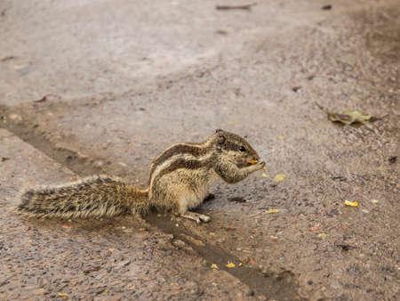foglia: ritratto di uno scoiattolo che mangia una foglia