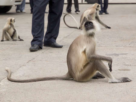 piernas: curious monkey looks surprised what she is doing unuomo unknown Foto de archivo