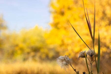 Fluffy wet wild flower in the autumn meadow at sunny day, scenic fall landscape