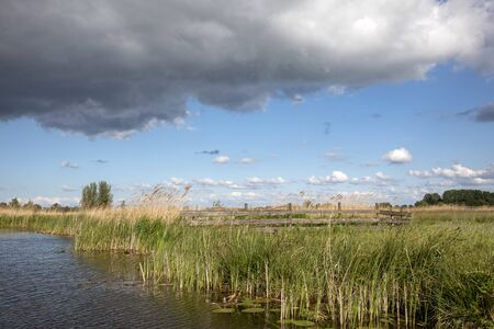Wooden fence and aquatic plants in a ditch, yellow reed, polder in Holland, rainy cloudy blue sky. Stockfoto