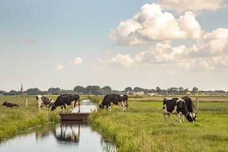 Cows walking on a bridge over a creek, reflection in the water, in a typical landscape of Holland, flat land and water and on the horizon a blue sky with clouds .