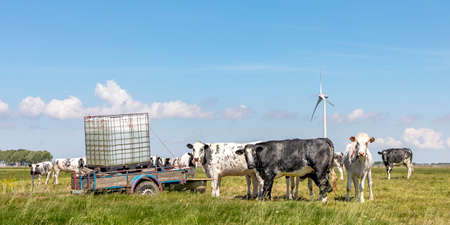 A drinking container as a trough on a cart for cows to drink water in the pasture, in the polder in Wons, Friesland and a wide blue sky