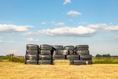 Stack of bales of hay, piled up, wrapped in black plastic, in a field, flat landscape scene under blue sky