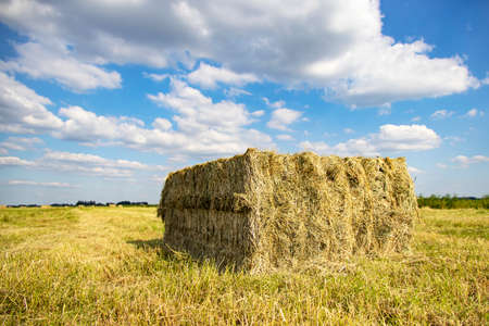 Perspective view of grass compacted in square silage bale in agricultural field and a cloudy sky