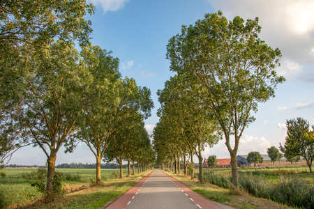 Road with trees on either side in Hollands countryside with red cycle path perspective