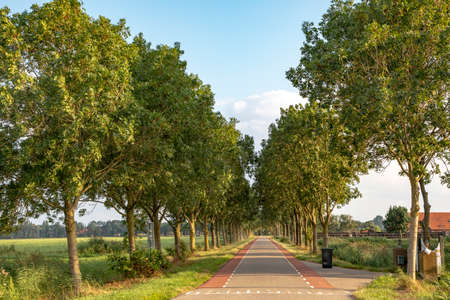Road with trees on either side in Holland with red cycle path on both sides and a black garbage container, perspective