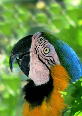attractiveness: Primer plano de la cara de Parrot