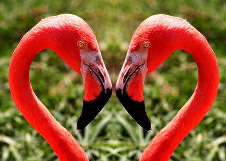 Twin flamingos photo