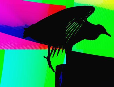 illus: Bird silhouette