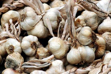 nutriments: Garlic, Allium sativum