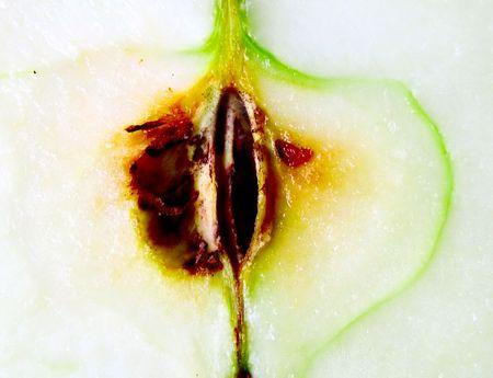 intymno: Intymność z jabłek