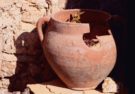 Broken Pot with Plant photo