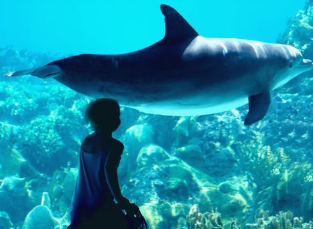The fairy tale of a child and a dolphin photo