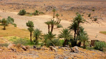 Oasi nel deserto  Archivio Fotografico - 1977837