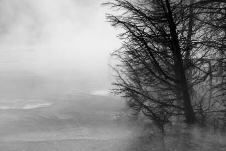 Trees in the fog, Yellowstone National Park, Usa Stock Photo
