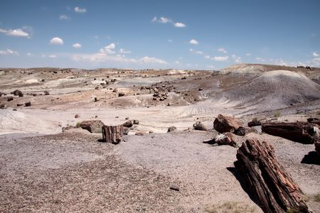 Petrified Wood in the Petrified Forest National Park, Arizona USA photo