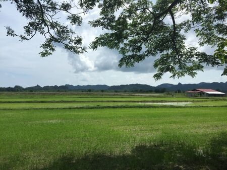 Paddy field. Back to nature.