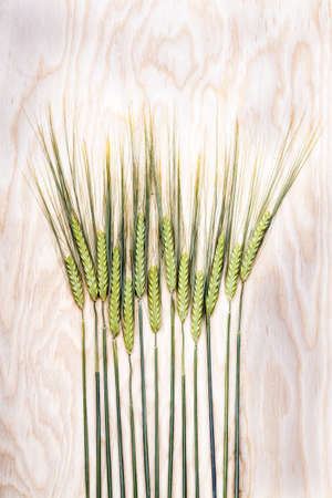 Wheat ears on wooden background Stock Photo
