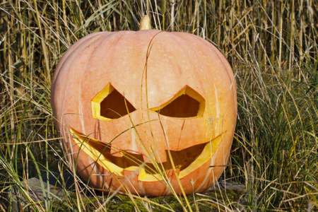 Halloween pumpkin face smile in grass photo