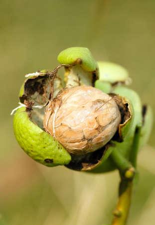 italian nut close up, vegetarian food concept
