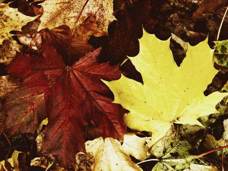 Golden November leaves background