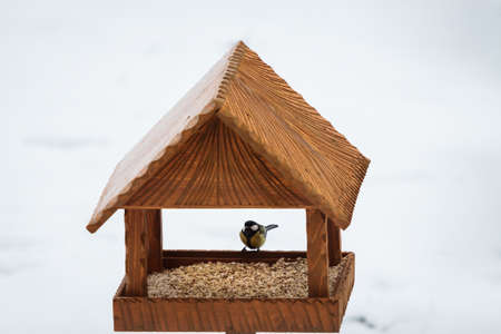 hand made animal feeder with great tit parus major  photo