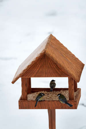 great tit birds in hand made animal feeder, winter time photo
